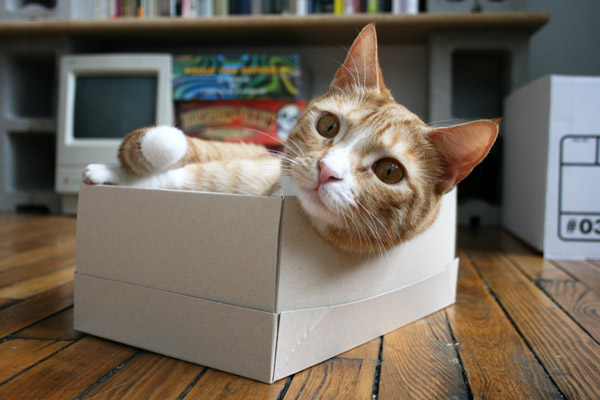 shelly the cat in her shoebox bed
